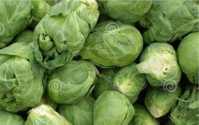新疆育出高含油量甘蓝型油菜新品种